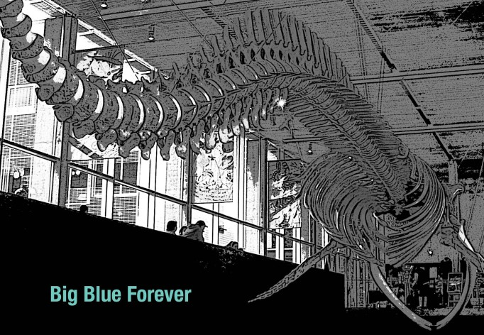 big blue whale skeleton